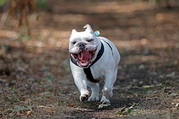 Foto Wolff-Foto des Monats November 2018: Hund Lotta, das Gute-Laune-Paket, von Barbara Novotny