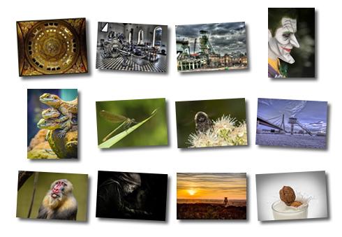 Collage aller Fotograf des Monats-Fotos von 2014