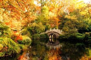 Foto Wolff-Foto des Monats Oktober 2018: Brücke im Zoo Duisburg im Herbst, von Gabi Hellmich