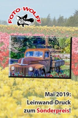 Mai 2019: Leinwand-Druck zum Sonderpreis!
