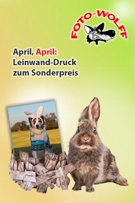 April 2019: Leinwand-Druck zum Sonderpreis