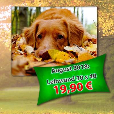September-Sonderangebot bei Foto Wolff in Dinslaken
