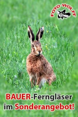 Bis Ende Juni 2019: BAUER-Ferngläser im Sonderangebot